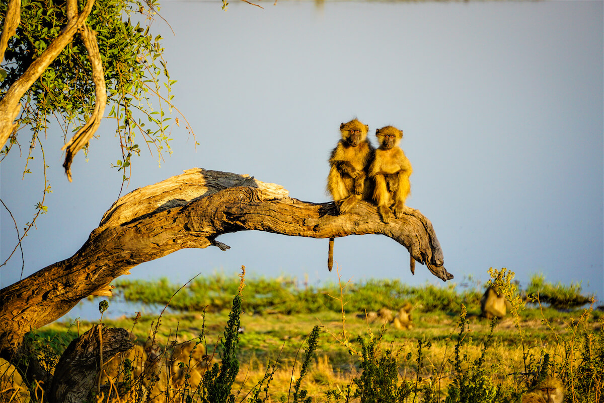 Botswana – Aafrika A ja B, Botswana - ReisiGuru.ee