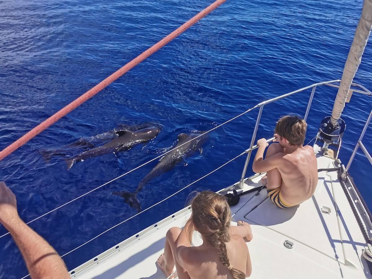 Vaalade vaatlemine Tenerifel, Kanaari saared - ReisiGuru.ee